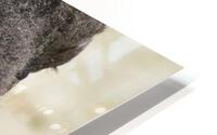Reflection of a Buffalo HD Metal print