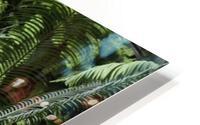 Trees Textures HD Metal print