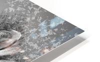 zebre 2 HD Metal print