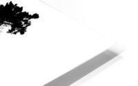 Tree silhouette HD Metal print