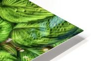 Hosta Glow HD Metal print