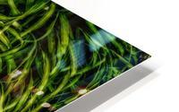 Green Chaos HD Metal print