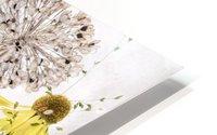 Alliums and heleniums HD Metal print