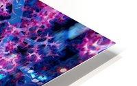Coral Hind HD Metal print