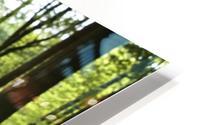 Bluebells On Forest Floor HD Metal print