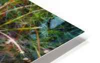 Reeds Reflecting On The Water; St. Albert, Alberta, Canada HD Metal print