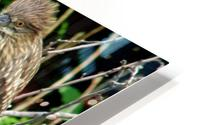 Birds in Lincoln Park  HD Metal print