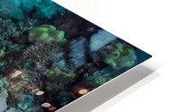 Clean turtle HD Metal print