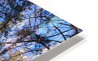 Winter. Forest. Shadow HD Metal print