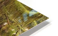 Water flowing through tree roots at Opal Creek Wilderness, Oregon HD Metal print