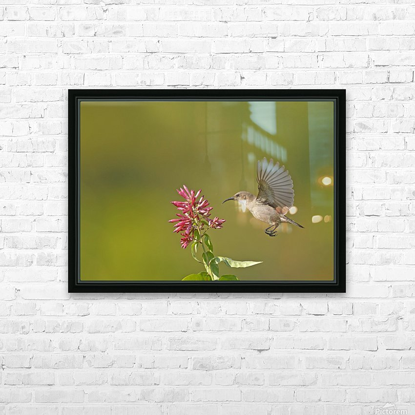 Sunbird HD Sublimation Metal print with Decorating Float Frame (BOX)