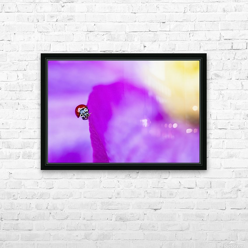 A ladybug on a pink clematis;British columbia canada HD Sublimation Metal print with Decorating Float Frame (BOX)