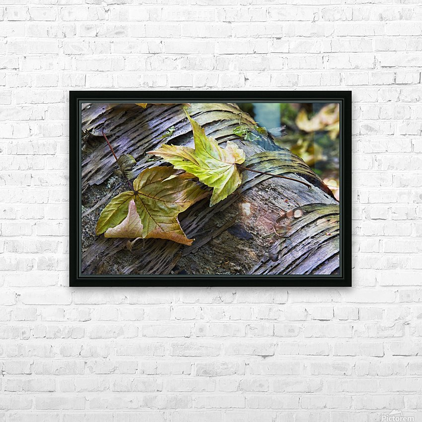 Maple leaves in autumn as they lay across a rotting log in a forest;British columbia canada HD Sublimation Metal print with Decorating Float Frame (BOX)