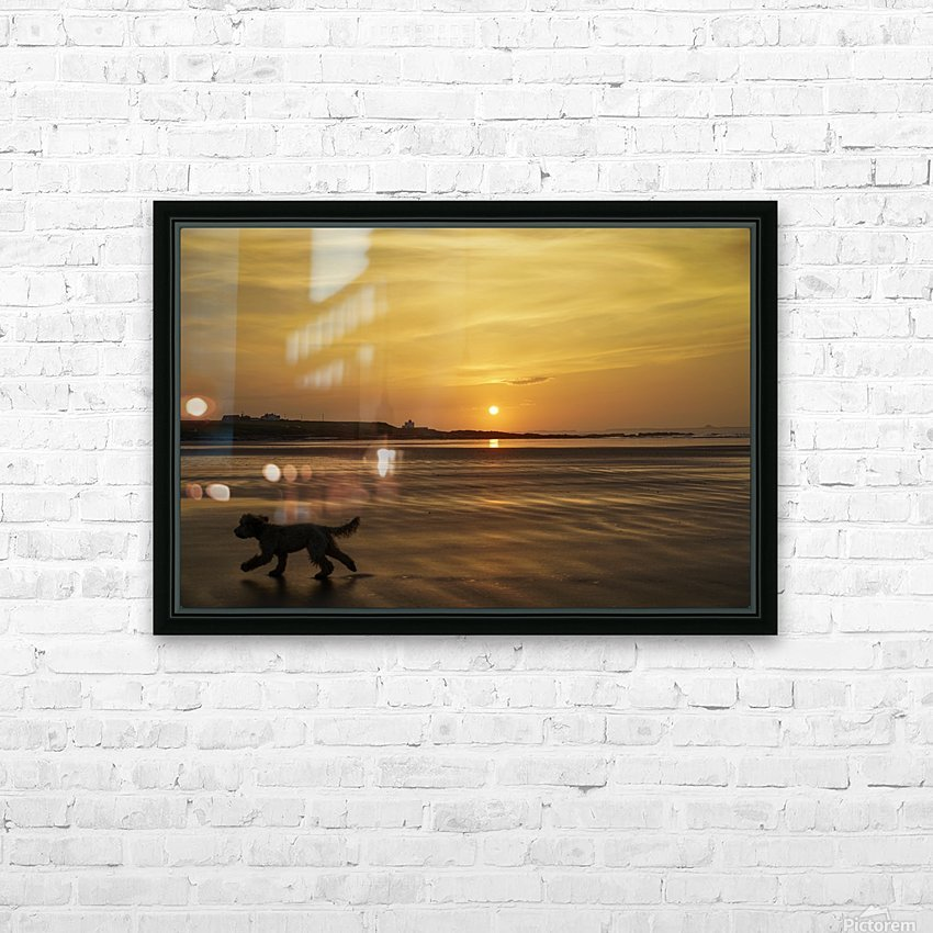 A dog runs across a wet beach with the golden sun setting in an orange sky along the coast and Bamburgh Castle in the distance; Bamburgh, Northumberland, England HD Sublimation Metal print with Decorating Float Frame (BOX)