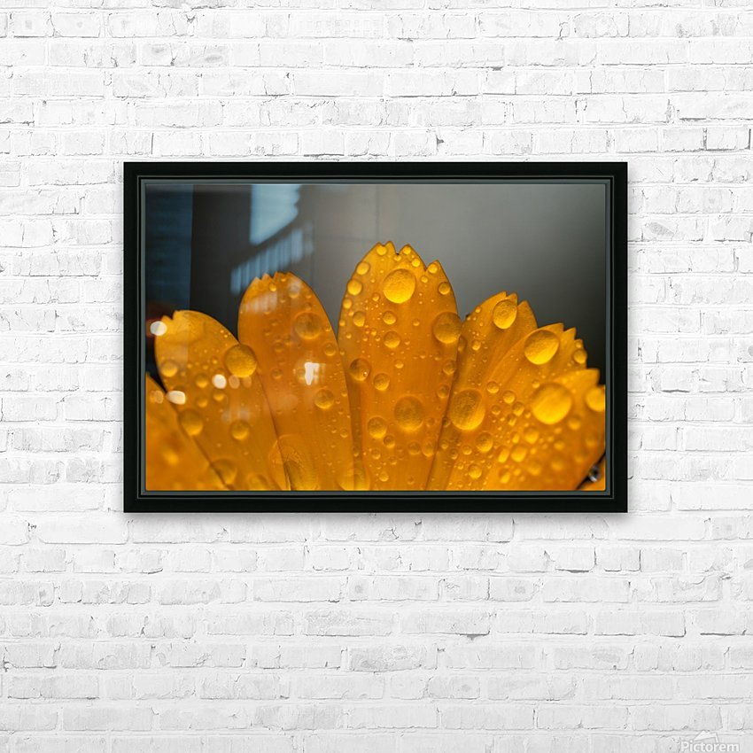 Close up of water droplets on orange flower petals; South Shields, Tyne and Wear, England HD Sublimation Metal print with Decorating Float Frame (BOX)