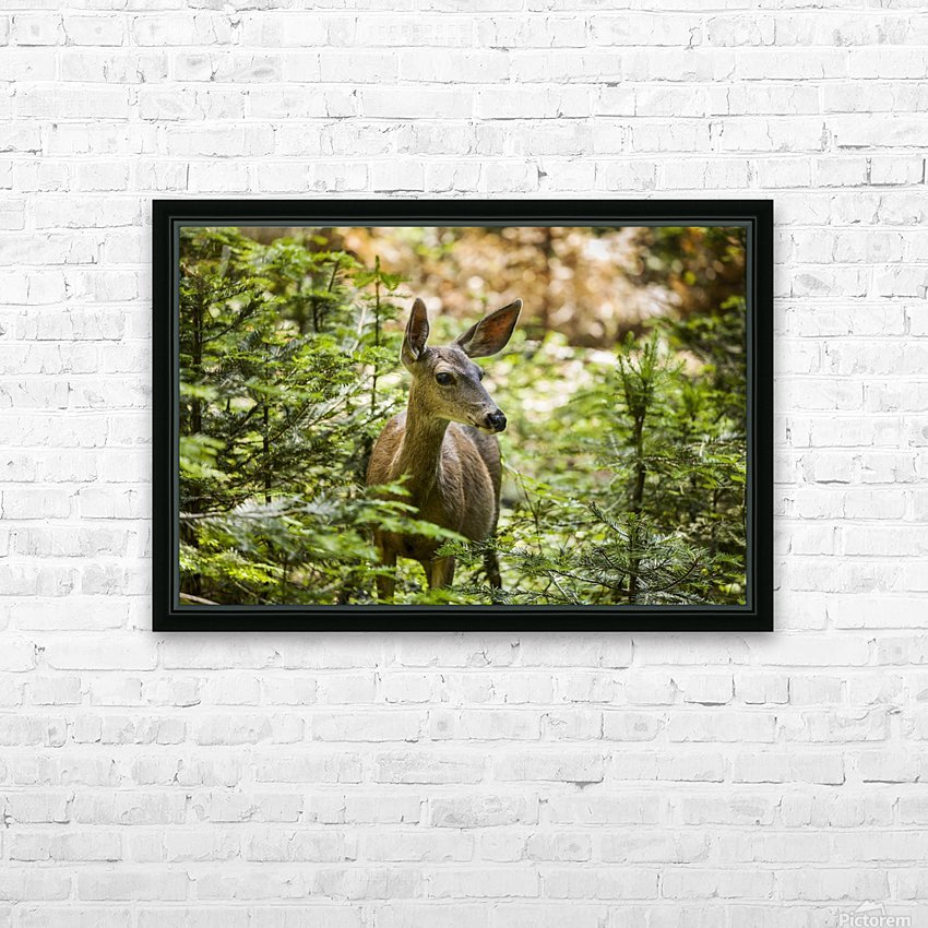 Mule deer (Odocoileus hemionus), Sequoia National Park; California, United States of America HD Sublimation Metal print with Decorating Float Frame (BOX)