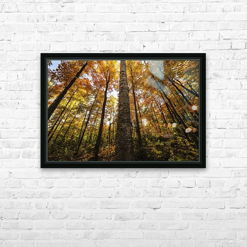 Looking up at the colourful canopy of leaves of Algonquin Park; Ontario, Canada HD Sublimation Metal print with Decorating Float Frame (BOX)