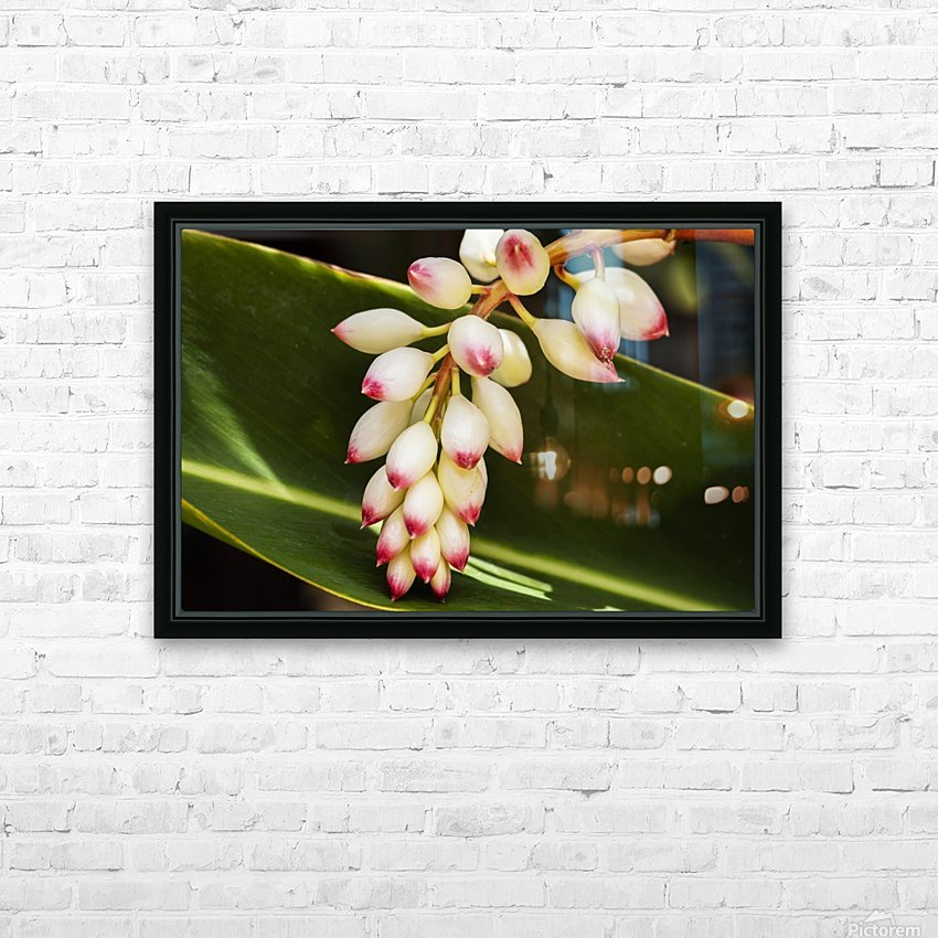 Close-up of white ginger flower Alpinia; Maui, Hawaii, United States of America HD Sublimation Metal print with Decorating Float Frame (BOX)