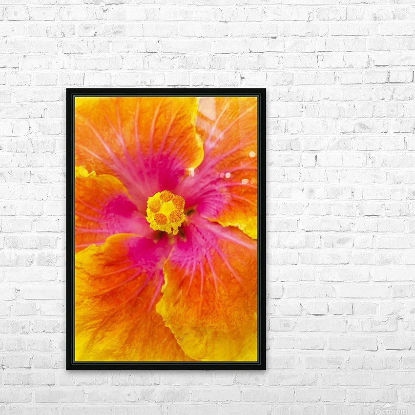 Close-up macro shot of a beautiful orange, pink and yellow Hibiscus flower; Honolulu, Oahu, Hawaii, United States of America HD Sublimation Metal print with Decorating Float Frame (BOX)