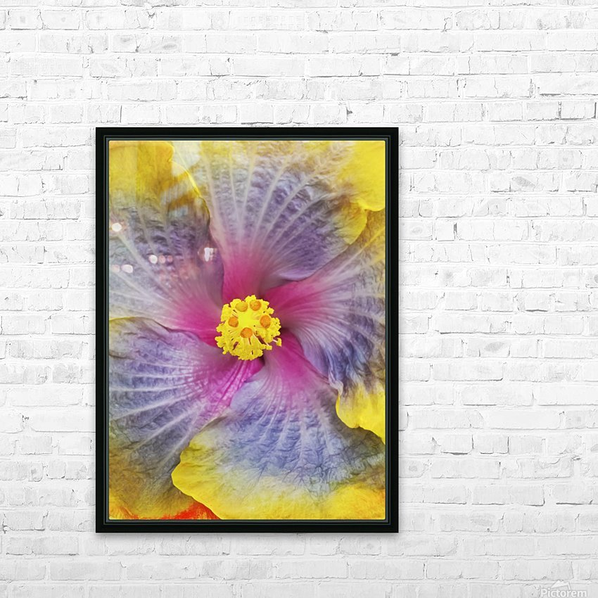 Close-up macro shot of a beautiful lavender, pink and yellow Hibiscus flower; Honolulu, Oahu, Hawaii, United States of America HD Sublimation Metal print with Decorating Float Frame (BOX)