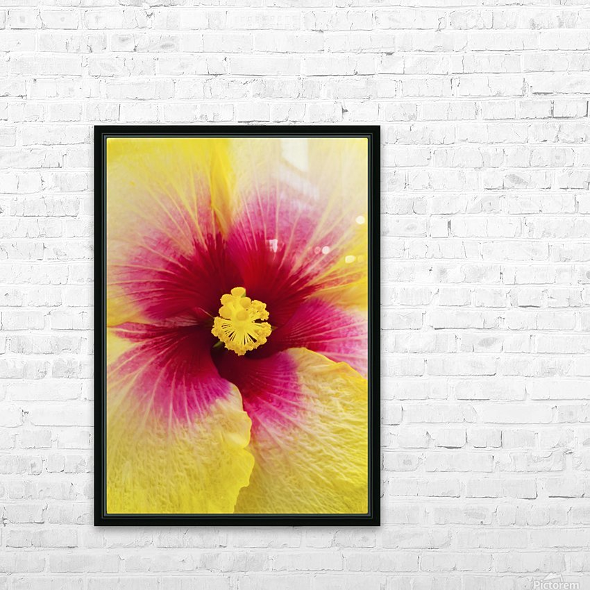 Close-up macro shot of a beautiful red and yellow Hibiscus flower; Honolulu, Oahu, Hawaii, United States of America HD Sublimation Metal print with Decorating Float Frame (BOX)