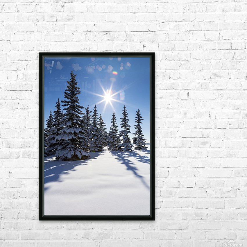 Snow covered evergreen trees on a snow covered hillside with blue sky and sun burst; Calgary, Alberta, Canada HD Sublimation Metal print with Decorating Float Frame (BOX)