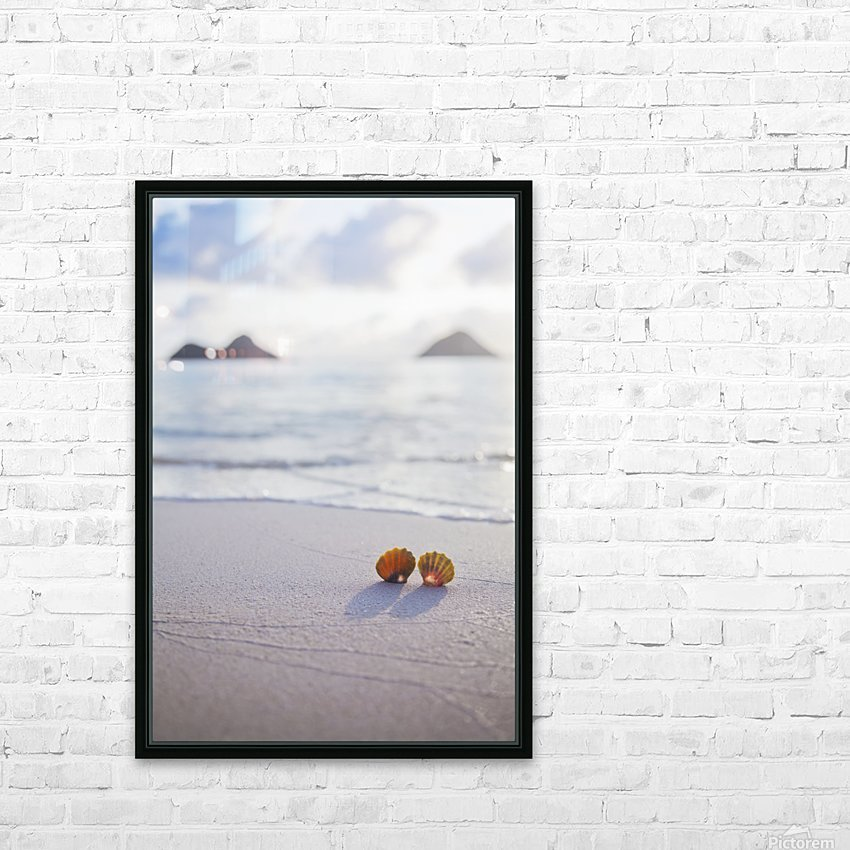 A set of two rare Hawaiian Sunrise Scallop Seashells, also known as Pecten Langfordi, in the sand at Lanikai beach, with Mokulua islands in background; Honolulu, Oahu, Hawaii, United States of America HD Sublimation Metal print with Decorating Float Frame (BOX)
