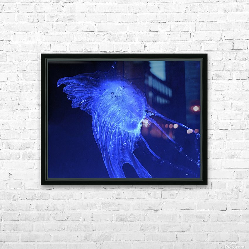 Glowing blue jellyfish in the dark water HD Sublimation Metal print with Decorating Float Frame (BOX)