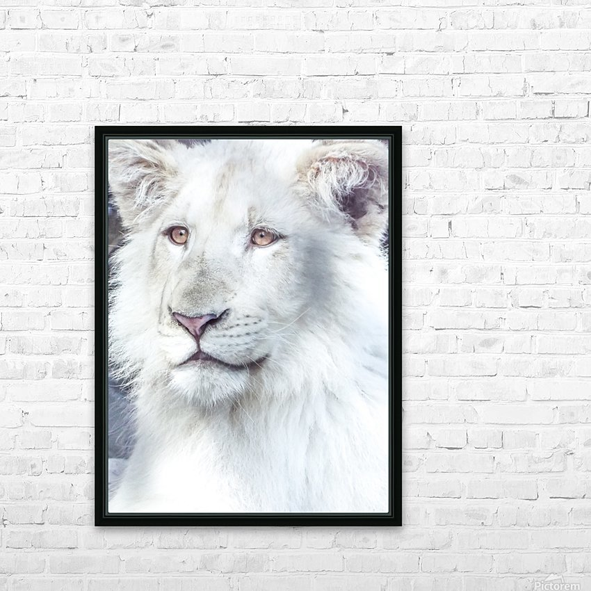 Juvenile White Lion  HD Sublimation Metal print with Decorating Float Frame (BOX)