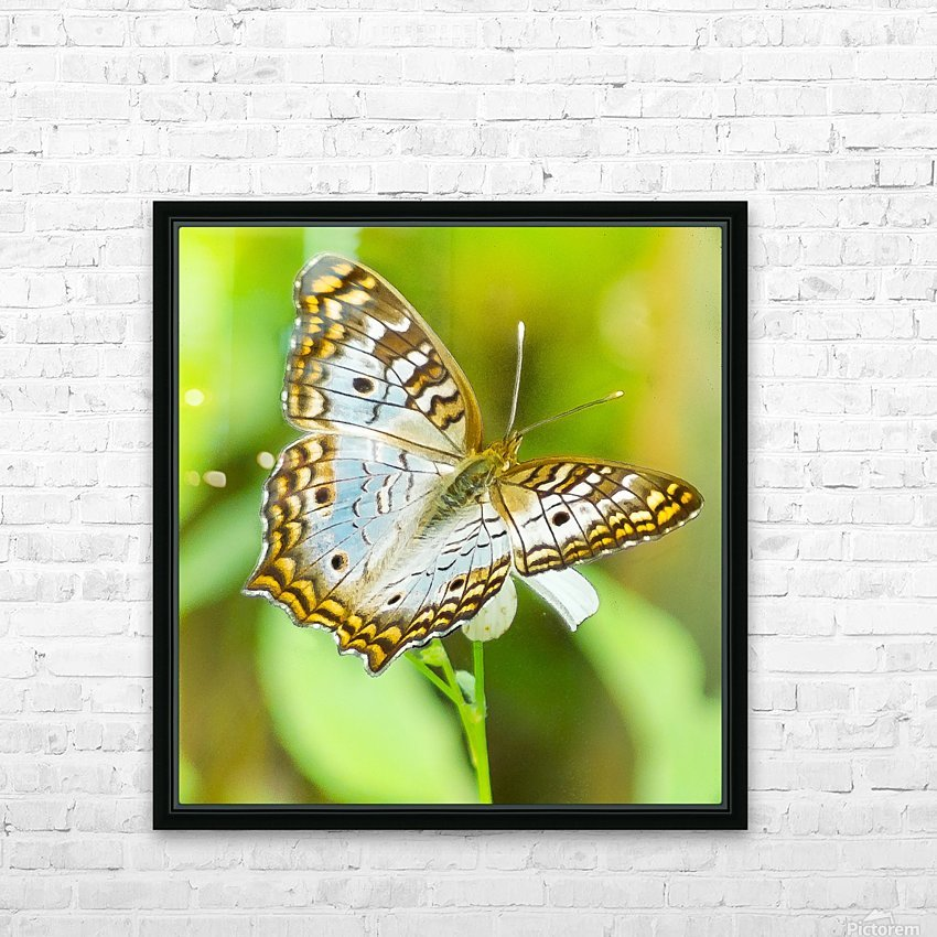 Psychedelic White Peacock Butterfly HD Sublimation Metal print with Decorating Float Frame (BOX)