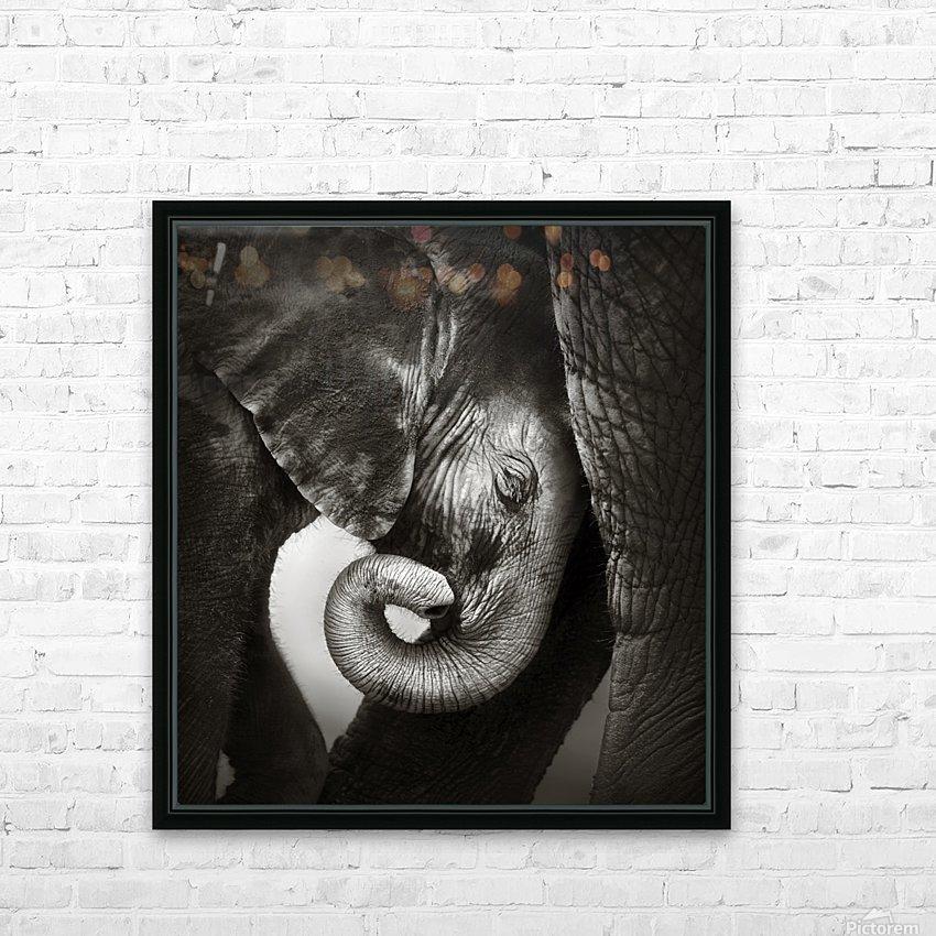 O Baby Elephant Seeking Comfort Art Print Home Decor Wall Art Poster