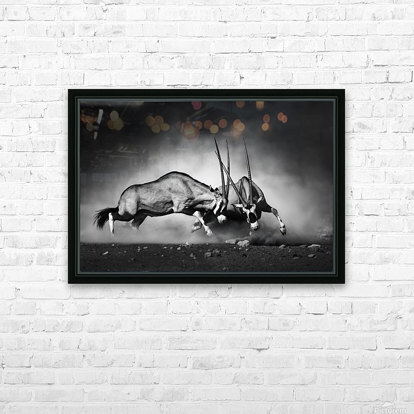 Gemsbok fight HD Sublimation Metal print with Decorating Float Frame (BOX)