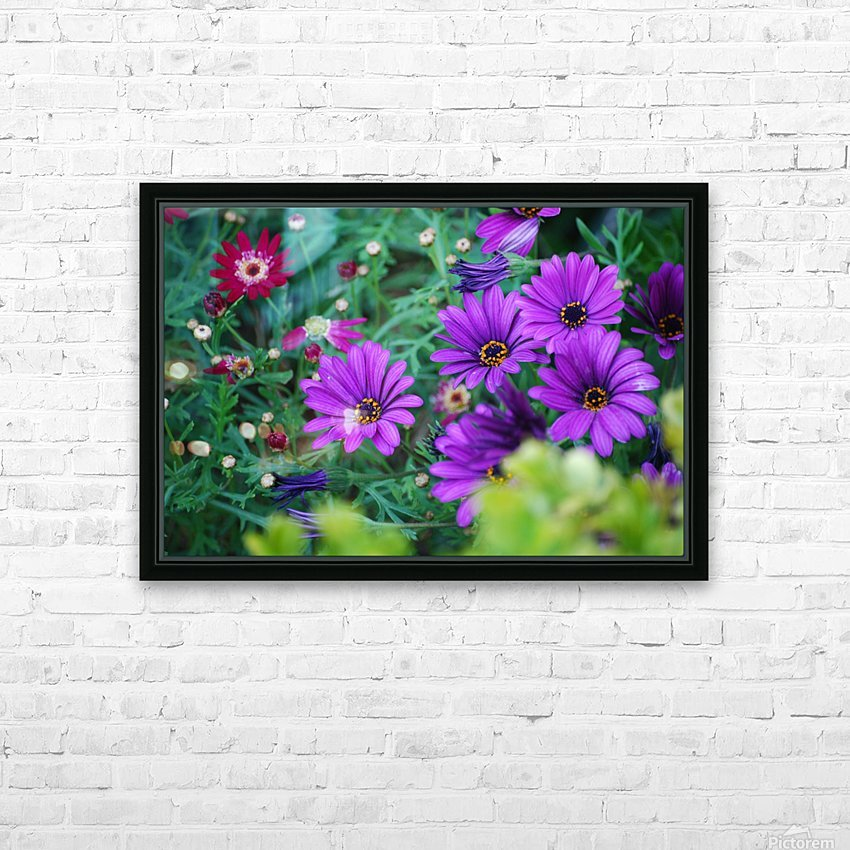 Purple Flowers in Dana Point CA HD Sublimation Metal print with Decorating Float Frame (BOX)
