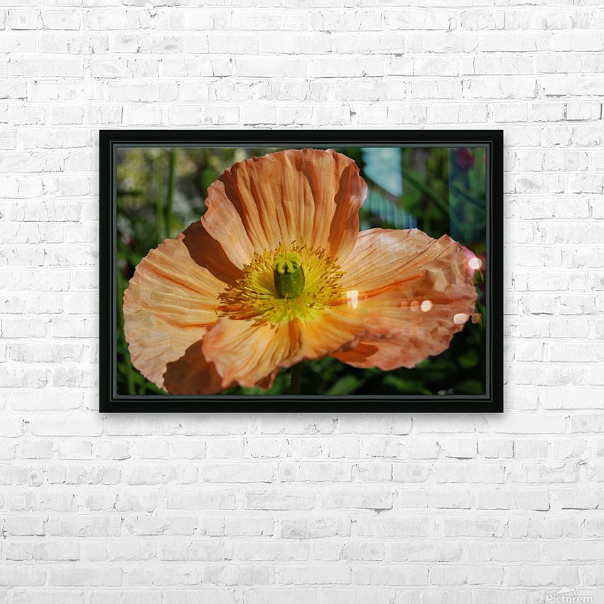 A Poppy Flower Growing HD Sublimation Metal print with Decorating Float Frame (BOX)