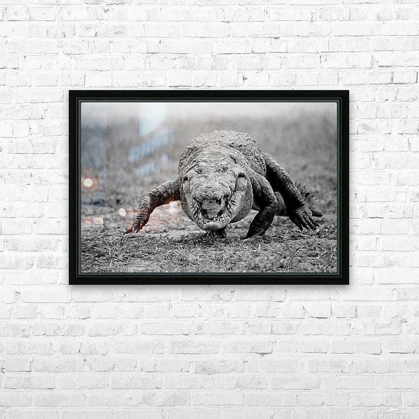 Crocodile Ghana HD Sublimation Metal print with Decorating Float Frame (BOX)