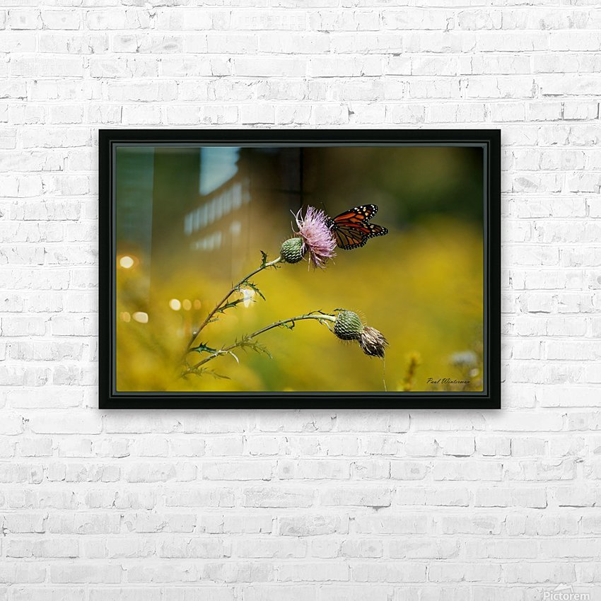 0017- Monarch Meal HD Sublimation Metal print with Decorating Float Frame (BOX)