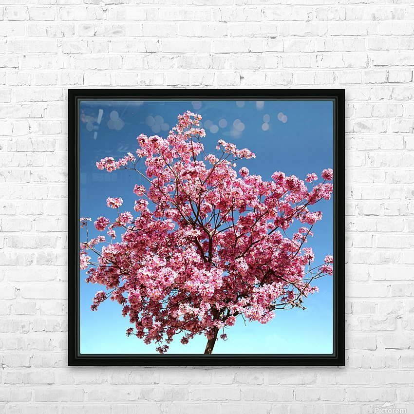 Cherry Blossom on Blue HD Sublimation Metal print with Decorating Float Frame (BOX)