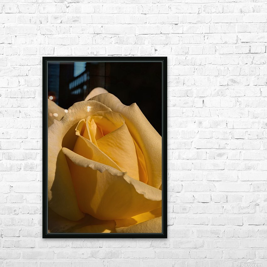 Yellow Rose Close up Single Black Background A010601_1406644 HD Sublimation Metal print with Decorating Float Frame (BOX)