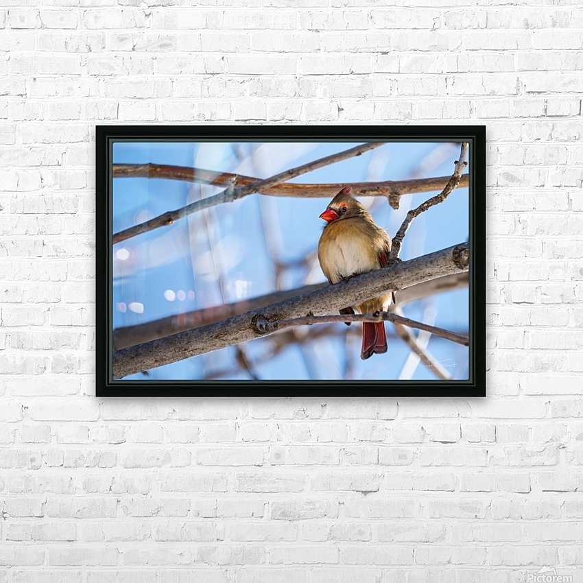 Madame Cardinal HD Sublimation Metal print with Decorating Float Frame (BOX)