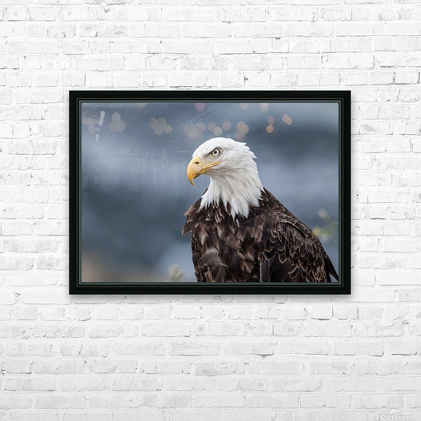 Portrait of an Eagle HD Sublimation Metal print with Decorating Float Frame (BOX)