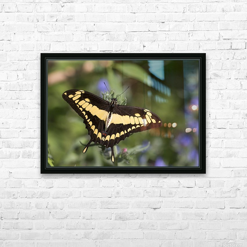 King swallowtail butterfly HD Sublimation Metal print with Decorating Float Frame (BOX)