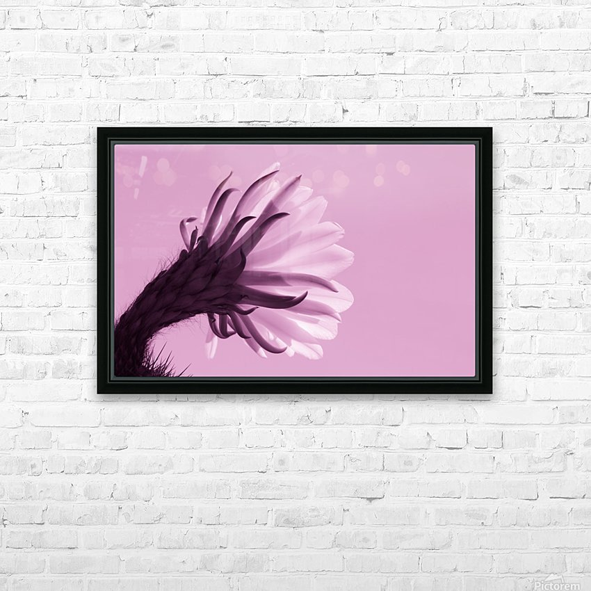 Cactus Flower in Pink HD Sublimation Metal print with Decorating Float Frame (BOX)