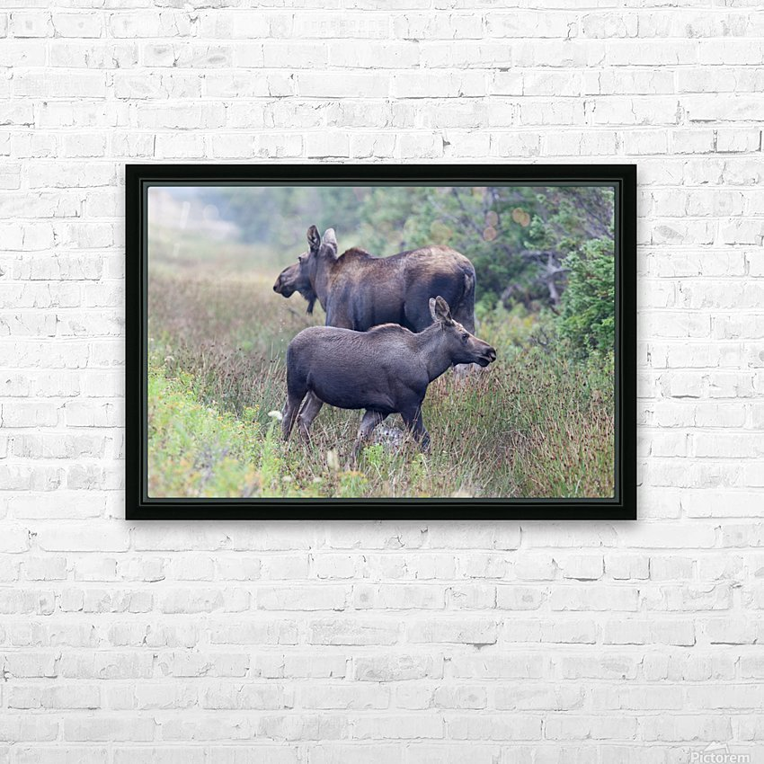 Mom and Calf Moose HD Sublimation Metal print with Decorating Float Frame (BOX)