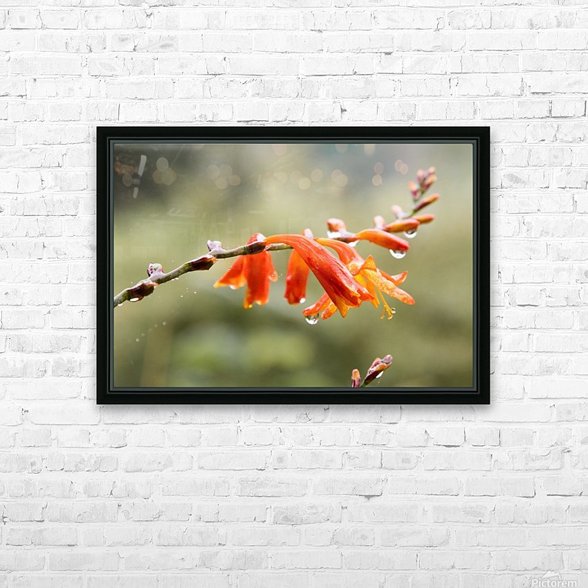 Orange Blooms with droplets HD Sublimation Metal print with Decorating Float Frame (BOX)