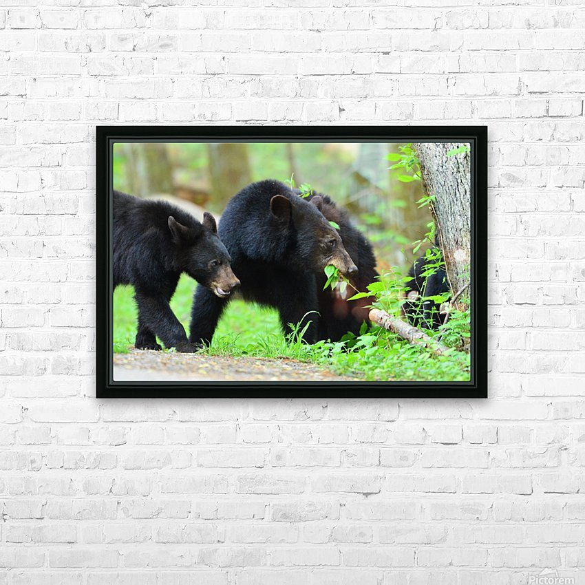 3540-Bear walk HD Sublimation Metal print with Decorating Float Frame (BOX)