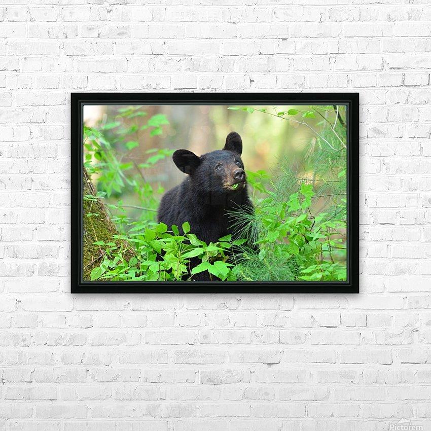 3597-Black Bear HD sublimation métal imprimé avec décoration flotteur cadre (boîte)