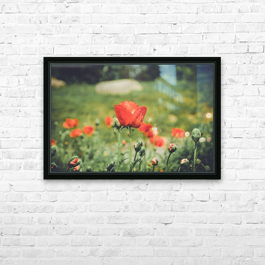 Field of Poppies HD Sublimation Metal print with Decorating Float Frame (BOX)