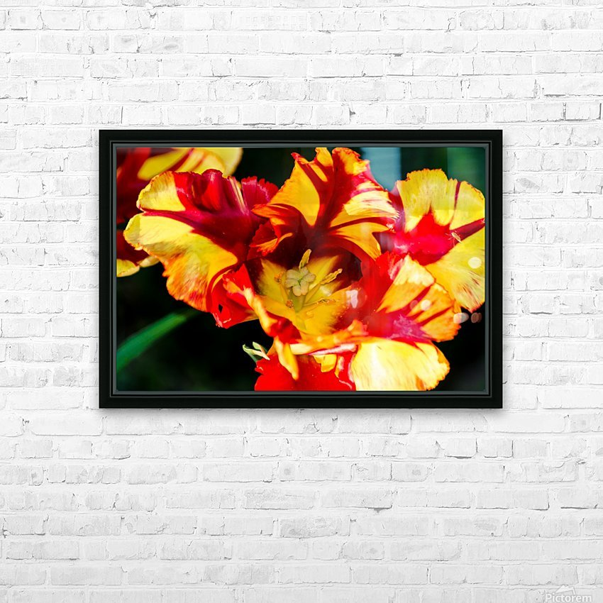 Tulip in Fringed Dress HD Sublimation Metal print with Decorating Float Frame (BOX)