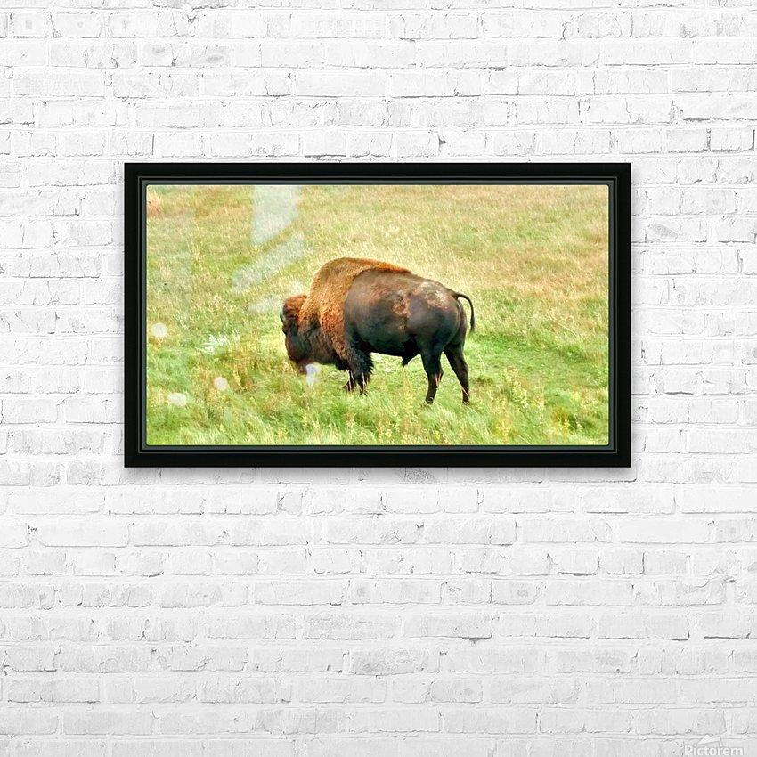 Lone Buffalo Custer State Park HD Sublimation Metal print with Decorating Float Frame (BOX)