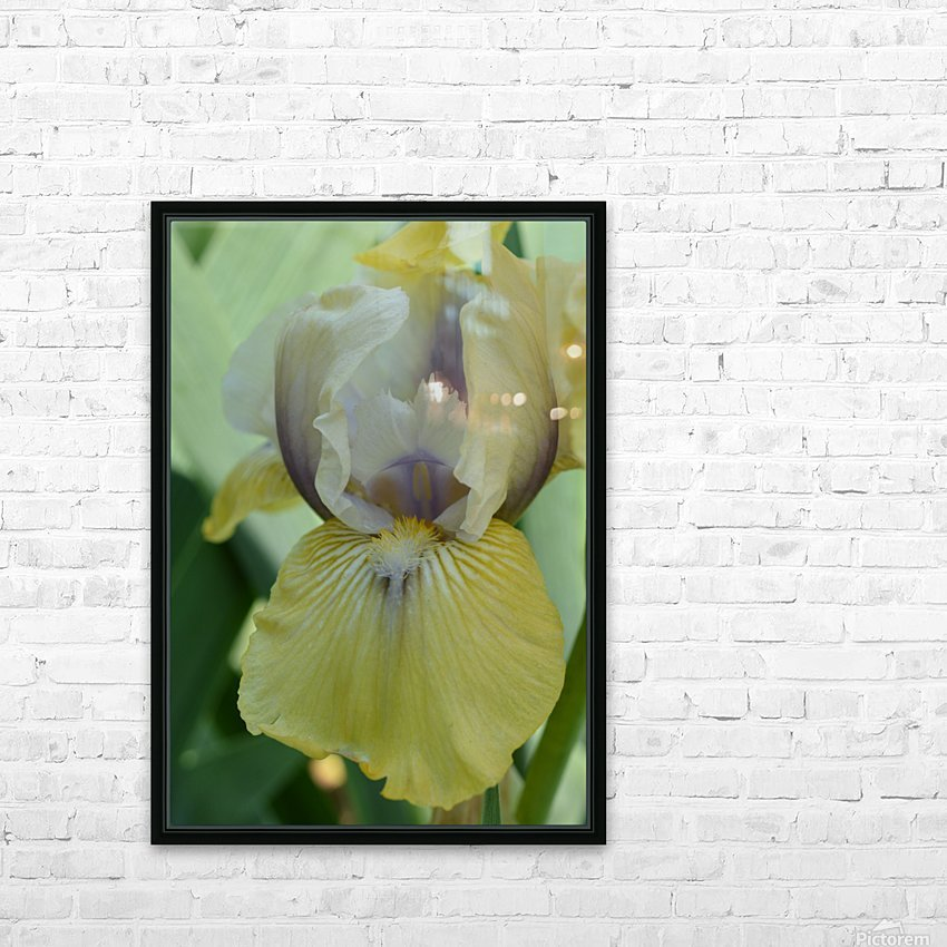 Yellow Iris Photograph HD Sublimation Metal print with Decorating Float Frame (BOX)